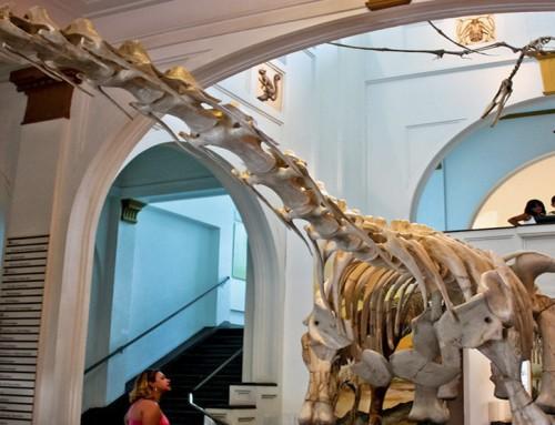 Como os museus favorecem o ensino de biologia