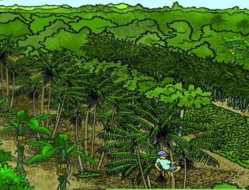 6 vídeos para entender mais sobre agrofloresta