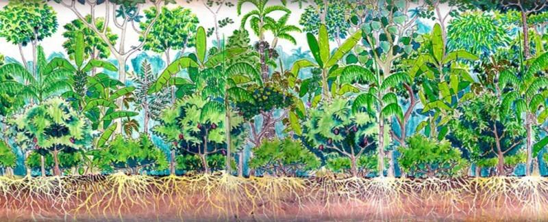 Resultado de imagem para agrofloresta
