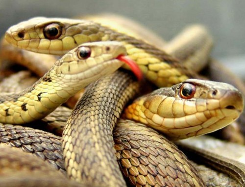 8 mitos e verdades sobre serpente