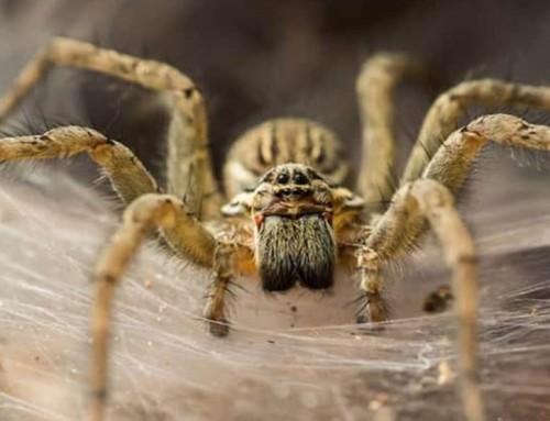 7 curiosidades sobre aranhas