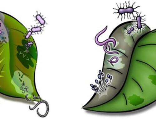 Como as plantas se defendem?
